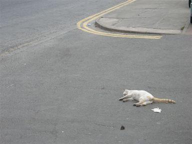 Dock_road_carcass